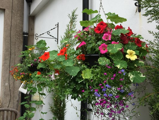 Hanging Baskets At Barclay Smith House In Helensburgh