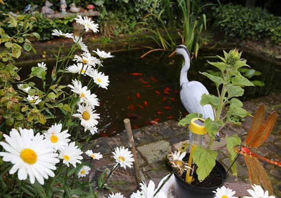 Our pond full of life