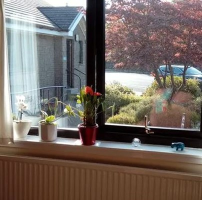 Windowsill with flowers in pots and a view of the front garden
