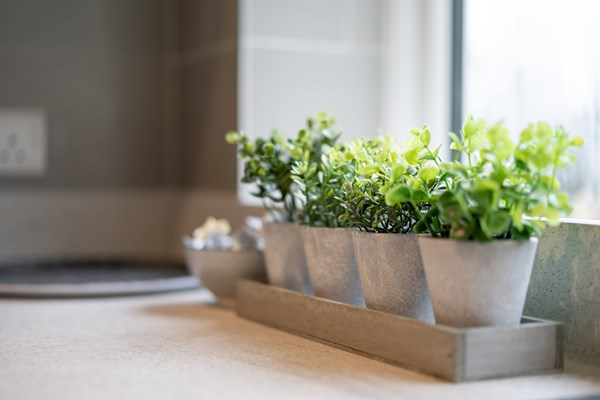 A row of small plants in ceramic pots