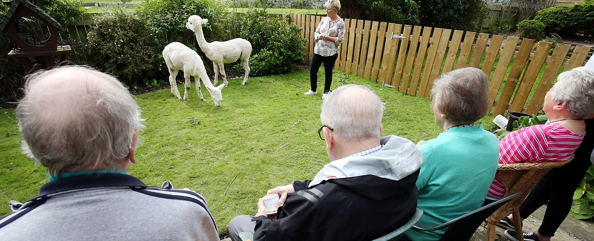 alpacas become residents at supported living scheme