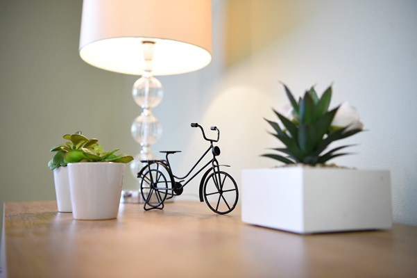 A table with a lamp, cacti in pots and a small metal bicycle